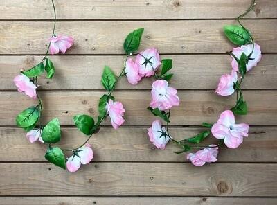 Ruusuköynnös, vaaleanpunainen