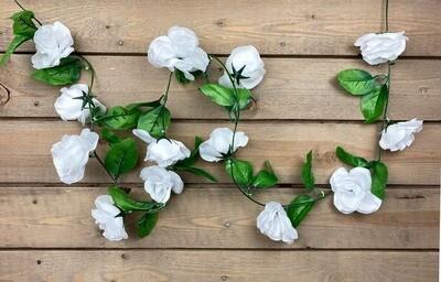 Ruusuköynnös, valkoinen