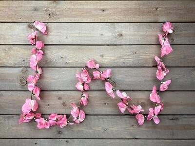 Orkideaköynnös, rosa