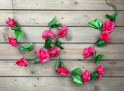 Ruusuköynnös, pinkki