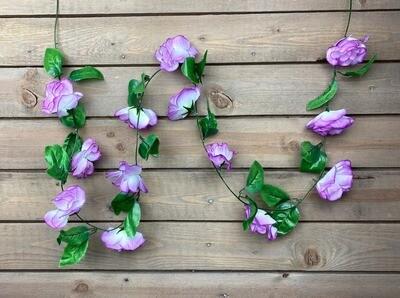 Ruusuköynnös, violetti