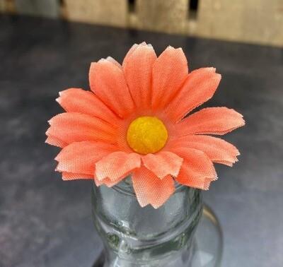 Pieni päivänkakkara kukkapää, persikka