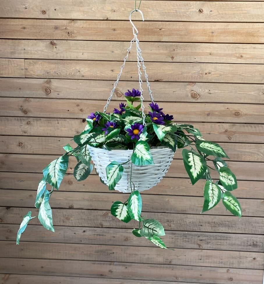 Silkkikukka-amppeli, violetit kukat