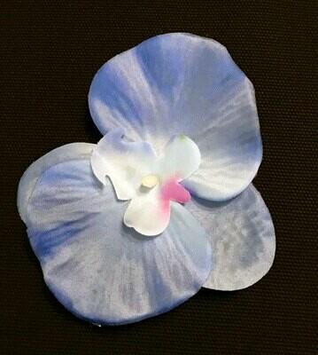 Orkidea-kukkapää, sininen