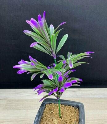 Koristeheinä, vihreä/violetti