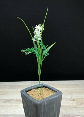 Teko-oksa, valkoinen kukinto