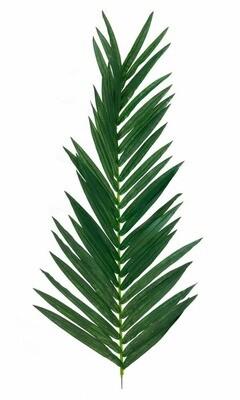 Suuri palmun lehti 150cm