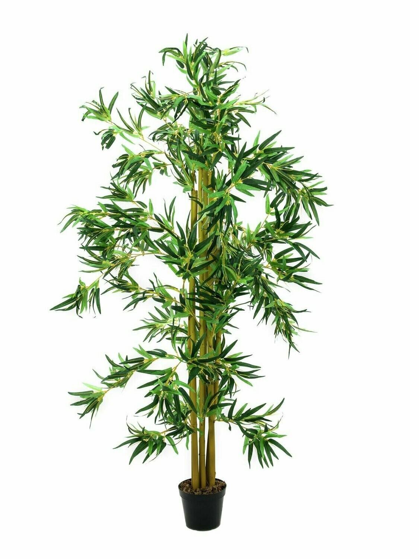 Bambupensas ruukussa 210cm