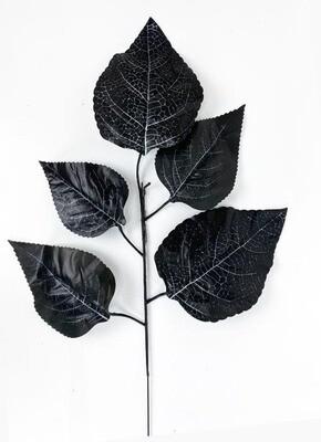 Viikunan teko-oksa, musta