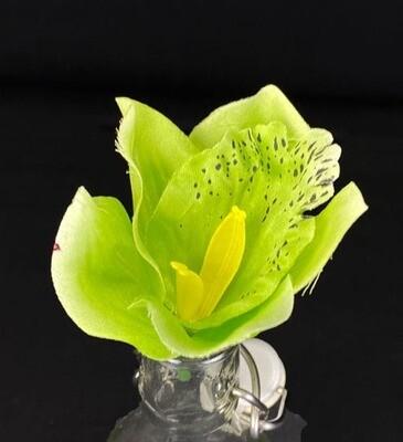 Orkidea kukkaosa, vihreä
