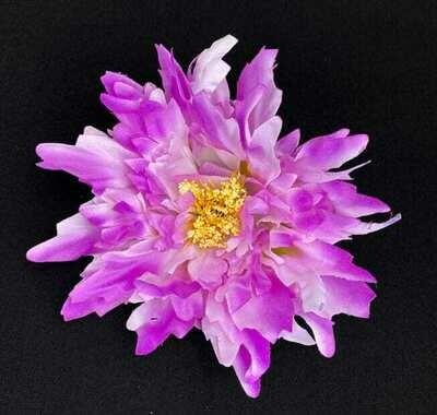 Pioni kukkaosa, violetti