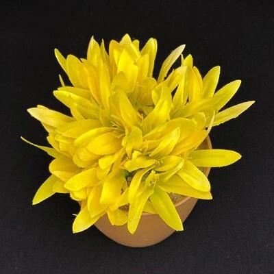 Sinisarja kukkapää, keltainen