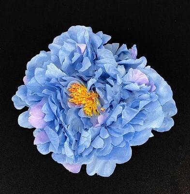 Pioni kukkapää, sininen