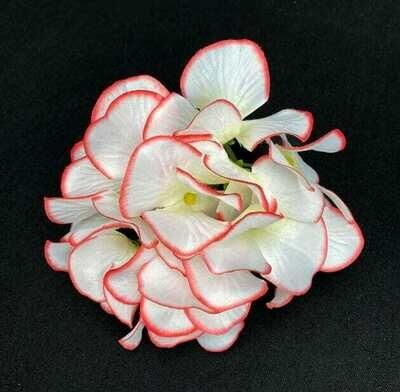 Hortensia kukkaosa, kerma/rosa