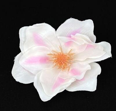 Magnolia kukkapää, valkoinen/vaaleanpunainen