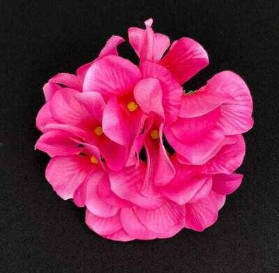 Hortensia kukkapää, fuksia