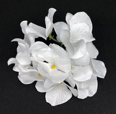 Hortensia kukkapää, valkoinen