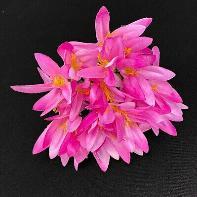Sinisarja (agapanthus) kukkapää, viininpunainen