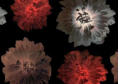 Lahjapaperi kukat - ISO RULLA 154m