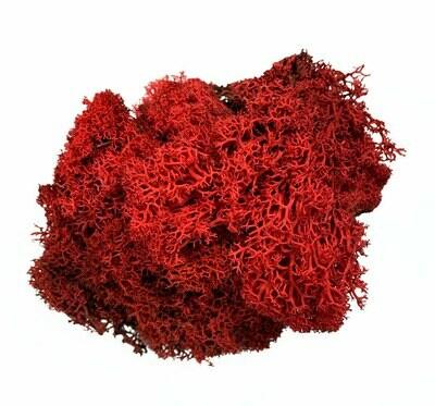 Luonnon jäkälä 40g, punainen