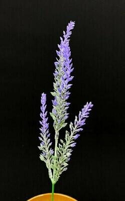 Kanerva, violetit kukinnot