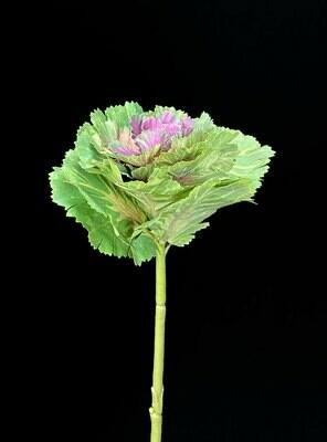 Kaali, vihreä/violetti