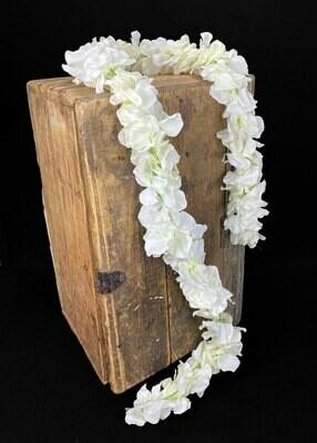 Hortensia kukkaköynnös 1,7m, kerma