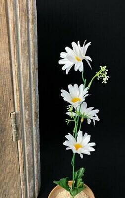 Päivänkakkara, valkoinen