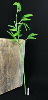 Bambun oksa 1m