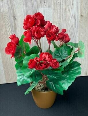 Begoniakimppu, punainen