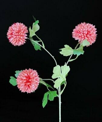 Krysanteemi, rosa