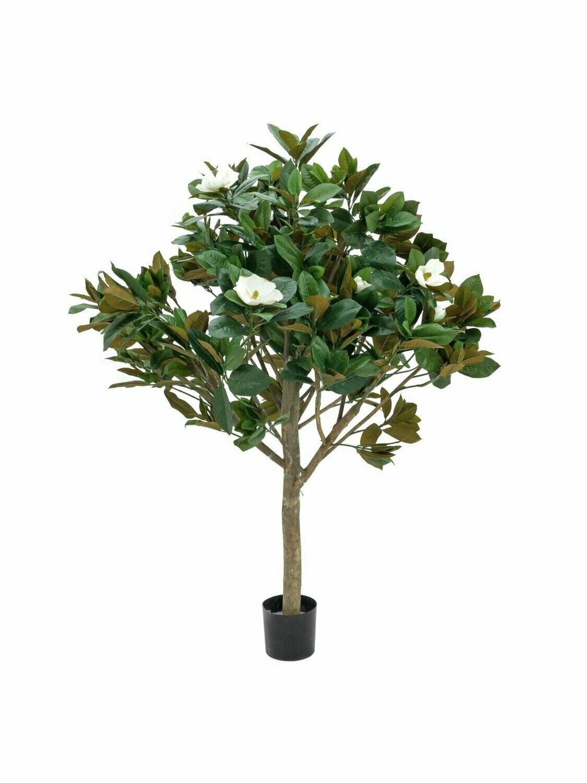 Magnolia tekopuu 150cm