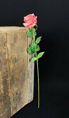 Samettiruusu, rosa