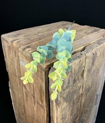 Eucalyptus teko-oksa, vihreä/keltainen