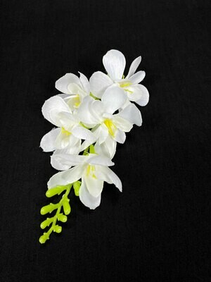 Freesia kukkaosa, valkoinen