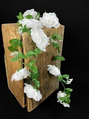 Ruusuköynnös, pure white