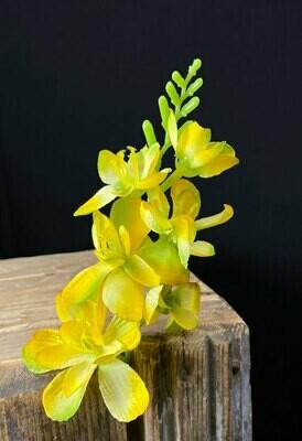 Freesia kukkapää, keltainen