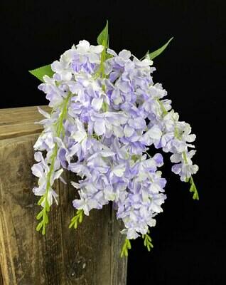Wisterian teko-oksa, violetti
