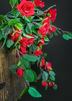 Ruusuamppeli, punainen