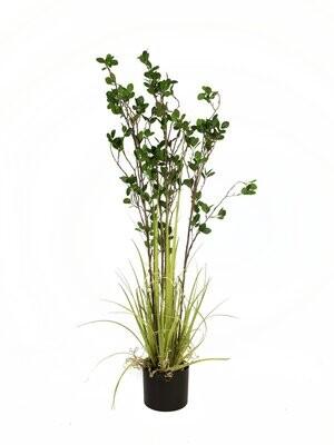 Viherpensas ruukussa 120cm