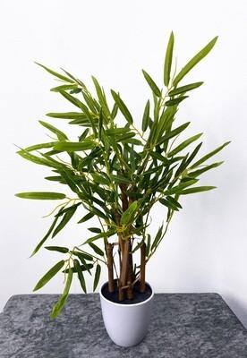Bambu tekokasvi - 60cm koristeruukussa