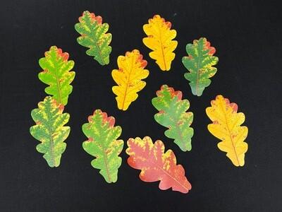 Tammen lehdet syksyn väreissä 10kpl