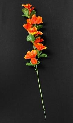 Punaoranssi orkidea silkkikukka
