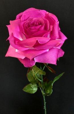 Ruusu, viininpunainen/valkoinen