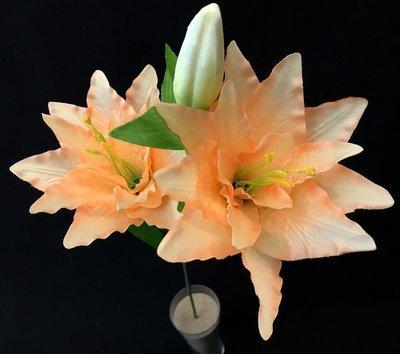 Lilja, vaalea persikka