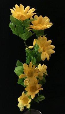 Päivänkakkara, keltainen