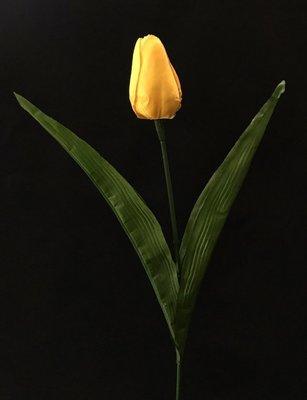 Tulppaani, keltainen