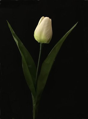 Tulppaani, kerma/vihreä