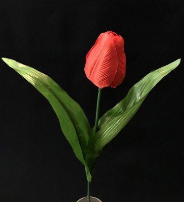 Tulppaani, punainen