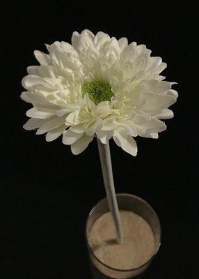 Gerbera tekokukka, valkoinen